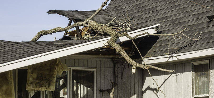 How To Prevent Roof Damage From Trees