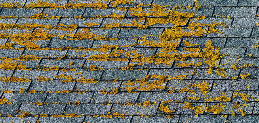 removing algae from your roof